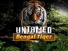 Дикий Бенгальский Тигр от Microgaming онлайн слот на деньги